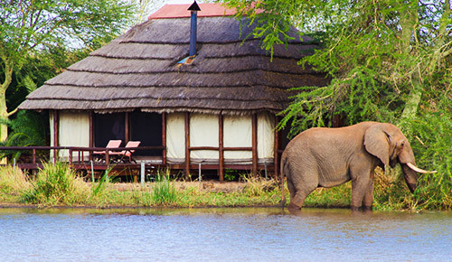 Photo of WORLD RANKED SAFARI LODGES WELCOME VISITORS TO THE GREATER KRUGER NATIONAL PARK